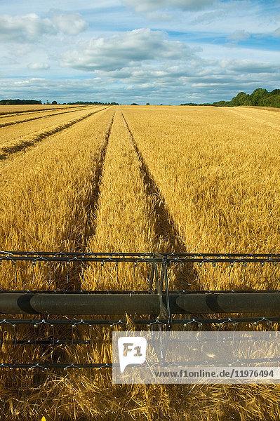Agrarland,Anzahl,Außenaufnahme,Bauernhof,Betreten verboten,Botanik