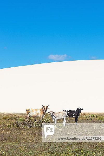 3,Agrarland,Amerika,Anzahl,Attraktivität,Außenaufnahme