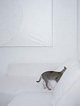 Couch,verstecken,weiß,grau