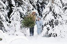 tragen ,Menschlicher Vater ,Sohn ,Weihnachtsbaum, Tannenbaum ,5-9 Jahre, 5 bis 9 Jahre