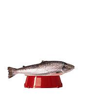 Fischen Sie in red Nahrungsmittelschüssel (digitale Composite)