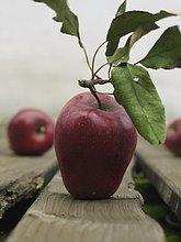 Nahaufnahme von Äpfeln auf Holzbohlen