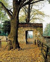 Weg,Torbogen,Herbst,Wanderweg,Deutschland,Lüdinghausen,Nordrhein-Westfalen