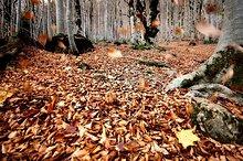 Monte Perdido und Ordesa Nationalpark. Provinz Huesca, Aragon, Spanien