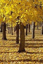 Herbst bei Uña Lagune. Provinz Cuenca. Castilla-La Mancha. Spanien.