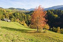 Bäume im Wald, Krakauhintermuehlen, Niedere Tauern, Steiermark, Österreich