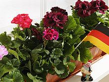 Blumenkasten mit Deutschlandfahne
