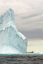 Eisberg,Neufundland,Kanada