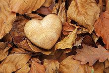 Detail,Details,Ausschnitt,Ausschnitte,Liebe,Konzept,Symbol,Wald,Holz,Close-up,Herbst,2,1,herzförmig,Herz,braun,Laub,Moos,Schweiz