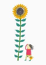 Frau gießt riesige Sonnenblume