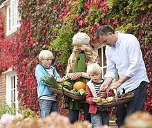 Gemüse,aufheben,Jahreszeit