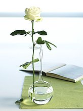 Weiße Rose in Glasvase