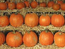 Pumpkins anzeigen