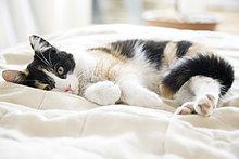 Kätzchen auf Bett entspannenden