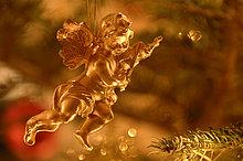 Baum,Weihnachten,Dekoration,Kiefer,Pinus sylvestris,Kiefern,Föhren,Pinie