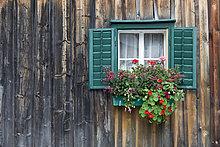 Traditionelles Holzhaus, Almhütte, mit grünem Fenster und Geranien, Salzkammergut, Österreich, Europa