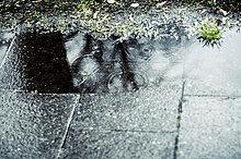 Regentropfen bilden Kreise in Pfütze, Spiegelung
