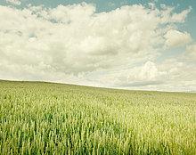 Tag ,Feld ,Weizen