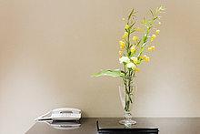 Blume ,Telefon ,Tisch