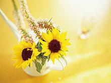 Blumenvase ,Sonnenblume, helianthus annuus