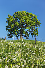 Bayern ,Deutschland ,Wolfratshausen