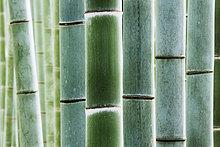 Detail, Details, Ausschnitt, Ausschnitte ,Wald ,Bambus