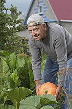 hoch,oben,Senior,Senioren,Mann,Garten,Kürbis,aufheben