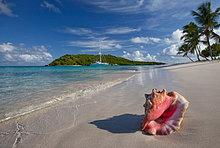 Tropisch,Tropen,subtropisch,Strand,Muschel