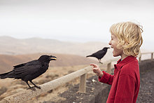 Krähe ,Junge - Person ,Zaun ,füttern