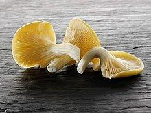 Frische ,gelb ,Auster ,roh