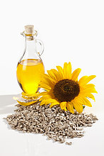 Sonnenblume, helianthus annuus ,Samen ,Öl