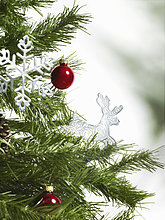 Stilleben,still,stills,Stillleben,Baum,grün,Ast,Kiefer,Pinus sylvestris,Kiefern,Föhren,Pinie,Nähnadel,Nadel