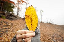 Frau,verstecken,Pflanzenblatt,Pflanzenblätter,Blatt,Herbst,halten