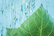 Pflanzenblatt, Pflanzenblätter, Blatt ,grün ,blau ,Farbe, Farben ,bemalen ,abbröckeln