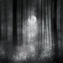Bäume und Farne im Mondlicht in einem stimmungsvollen Wald