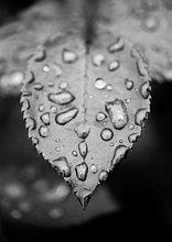 hoch, oben ,nahe ,Wasser ,Wassertropfen, Tropfen ,nass ,Pflanzenblatt, Pflanzenblätter, Blatt