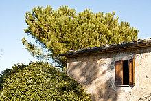 Fenster,Baum,Gebäude,Italien,Toskana,Volterra