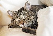 Bett,schlafen