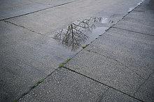 Baum,Spiegelung,Pfütze,Pflasterstein,Pflaster,nackt