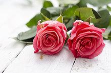 weiß,Holz,blühen,2,Rose