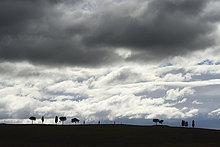 Wolke,Baum,Sturm,Feld,Kiefer,Pinus sylvestris,Kiefern,Föhren,Pinie,Italien,Toskana,Val d'Orcia,San Quirico d'Orcia,Provinz Siena