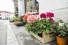 Außenaufnahme,Blume,Pflanze,Asphalt,Laden,Florist,Topfpflanze,Italien,Bordstein