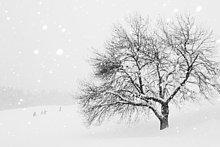 Verschneiter Baum, Tirol, Österreich, Europa