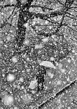 Frau,gehen,Regenschirm,Schirm,unterhalb,Schneeflocke,1,Genf,schwer,Schweiz