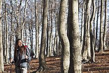 Laubwald,gehen,wandern