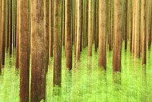 Bäume im Wald, Schwangau, Allgäu, Bayern, Deutschland, Europa