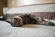 Entspannung,Bett,Katze
