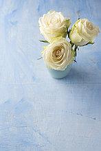 Blume,Beleuchtung,Licht,weiß,Boden,Fußboden,Fußböden,blau,Rose,Blumenvase,3