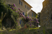 Herrenhaus,Blume,Garten,Italien,Maremma,Toskana