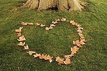 Herz aus Laub auf einer Wiese